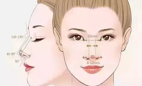 鼻型黄金比例